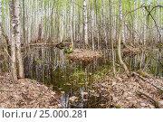 Birch Grove in water. Стоковое фото, фотограф Дмитрий Тищенко / Фотобанк Лори