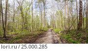 Купить «The road in the spring forest», фото № 25000285, снято 1 мая 2012 г. (c) Дмитрий Тищенко / Фотобанк Лори