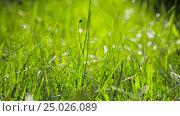 Blurred Grass Background With Water Drops. HD. Стоковое видео, видеограф Сергей Семенович Мальков / Фотобанк Лори
