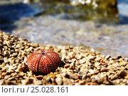 Море. Стоковое фото, фотограф Роман Кузьмин / Фотобанк Лори