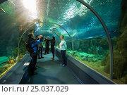 Купить «Sochi Discovery World Aquarium. Russia», фото № 25037029, снято 11 февраля 2016 г. (c) Сергей Лаврентьев / Фотобанк Лори