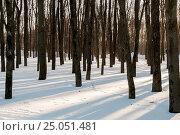 Купить «Зимний лесной пейзаж .Деревья в зимнем лесу», эксклюзивное фото № 25051481, снято 30 января 2017 г. (c) Игорь Низов / Фотобанк Лори