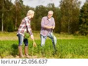 Купить «senior couple with shovel picking carrots on farm», фото № 25056637, снято 25 августа 2016 г. (c) Syda Productions / Фотобанк Лори
