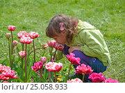 Купить «Маленькая девочка нюхает розовые тюльпаны в весеннем саду», фото № 25058933, снято 3 мая 2016 г. (c) Ирина Борсученко / Фотобанк Лори