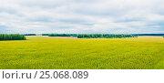 Cornfield and forest. Стоковое фото, фотограф Алексей Яговкин / Фотобанк Лори