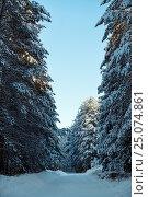 Snowy mountain road in sunny winter forest, фото № 25074861, снято 7 января 2017 г. (c) Гурьянов Андрей / Фотобанк Лори