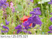 Купить «View in of a flower meadow, notch», фото № 25075321, снято 4 августа 2009 г. (c) mauritius images / Фотобанк Лори
