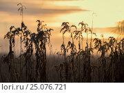 Купить «4 Season winter,beautiful,beauty of nature,blade of grass,calm,chilly,climate,closeup,closeup capture,closeup shot,cold,cold weather,countryside,covering...», фото № 25076721, снято 17 декабря 2016 г. (c) mauritius images / Фотобанк Лори