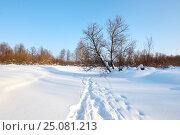 Winter forest a lot of snow. The sun through the trees. Стоковое фото, фотограф Сергей Семенович Мальков / Фотобанк Лори