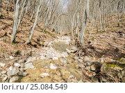 Купить «Река Боса в Крымском лесу ранней весной», фото № 25084549, снято 29 марта 2014 г. (c) Выскуб Анна / Фотобанк Лори