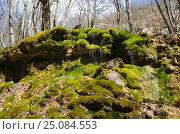 Купить «Зелёный водопад в весеннем лесу», фото № 25084553, снято 29 марта 2014 г. (c) Выскуб Анна / Фотобанк Лори