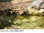Купить «Прозрачная вода горной реки и опавшие дубовые листья», фото № 25084561, снято 29 марта 2014 г. (c) Выскуб Анна / Фотобанк Лори