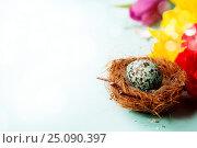 Купить «Easter egg in birds nest with spring flowers», фото № 25090397, снято 19 февраля 2016 г. (c) Наталия Кленова / Фотобанк Лори