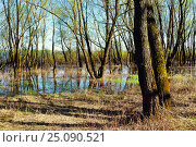 Spring forest landscape - riparian forest trees flooded with overflowing river water in sunny spring weather, фото № 25090521, снято 5 мая 2016 г. (c) Зезелина Марина / Фотобанк Лори
