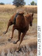 Рыжая кобылка. Стоковое фото, фотограф Дарья Пикунова / Фотобанк Лори