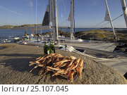 Купить «Lobster and beer on shore awaiting consupmtion, in the background are two yachts at anchor.», фото № 25107045, снято 20 июля 2018 г. (c) Nature Picture Library / Фотобанк Лори