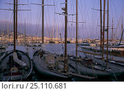 Купить «Classic yachts moored stern-to in the port of Cannes, France. September 2004», фото № 25110681, снято 16 июля 2018 г. (c) Nature Picture Library / Фотобанк Лори