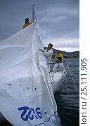Купить «Yacht crew pulling the mainsail down a broken mast.», фото № 25111905, снято 16 октября 2019 г. (c) Nature Picture Library / Фотобанк Лори