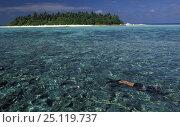 Купить «Woman snorkelling in front of a Halaveli island, Maldives. Model released.», фото № 25119737, снято 3 июля 2020 г. (c) Nature Picture Library / Фотобанк Лори