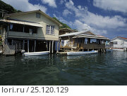 Купить «Palafitte houses in French harbour, Roatan, Honduras.», фото № 25120129, снято 7 августа 2020 г. (c) Nature Picture Library / Фотобанк Лори