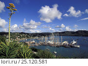 Купить «View from neighbouring hills of tall masts in Falmouth harbour, Antigua, Caribbean.», фото № 25120581, снято 23 мая 2018 г. (c) Nature Picture Library / Фотобанк Лори