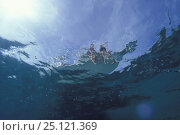 Купить «Underwater view of an anchored motorboat, with two children dangling their legs over the side, Bahamas.», фото № 25121369, снято 26 мая 2018 г. (c) Nature Picture Library / Фотобанк Лори