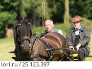 Купить «Two men drive their Dale pony, near Barnard Castle, County Durham, England, UK, July 2016. Critically endangered breed.», фото № 25123397, снято 19 июля 2018 г. (c) Nature Picture Library / Фотобанк Лори