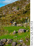 Купить «Pony trap in the Gap of Dunloe Trail, Killarney National Park, Killarney, Ring of Kerry, Iveragh Peninsula, County Kerry, Ireland, Europe. September 2015.», фото № 25126113, снято 17 августа 2018 г. (c) Nature Picture Library / Фотобанк Лори