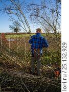 Купить «Traditional hedge laying, Fosse Cross, Gloucestershire, UK. November 2015.», фото № 25132929, снято 19 августа 2018 г. (c) Nature Picture Library / Фотобанк Лори