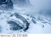 Купить «Coastal landscape in snow blizzard, Hornøya, Finnmark, Norway March 2014», фото № 25137805, снято 22 сентября 2018 г. (c) Nature Picture Library / Фотобанк Лори