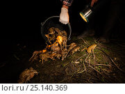Купить «Person tipping out bucket full of European toads (Bufo bufo) after transporting them across a road, Poncet, Franche-Comte, France, March.», фото № 25140369, снято 23 апреля 2018 г. (c) Nature Picture Library / Фотобанк Лори