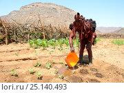 Купить «Himba woman watering her maize crop during dry season, Marienfluss Valley, Kaokoland Desert, Namibia. October 2015», фото № 25140493, снято 9 июля 2020 г. (c) Nature Picture Library / Фотобанк Лори
