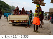 Купить «Himba women leaving the market in their car. Women always sit in the back of the pick-up since they are covered with ochre, City of Opuwo, Kaokoland, Namibia. October 2015», фото № 25143333, снято 2 июля 2020 г. (c) Nature Picture Library / Фотобанк Лори