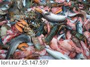 Купить «Haddock (Melanogrammus aeglefinus), Dogfish (Squalidae) and Lobster (Nephropidae) Georges Bank off Massachusetts, New England, USA, May 2015.», фото № 25147597, снято 27 марта 2019 г. (c) Nature Picture Library / Фотобанк Лори