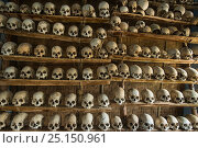 Купить «Head-hunted human skulls, collected by the Konyak Naga tribe,  North East India, October 2014.», фото № 25150961, снято 21 мая 2018 г. (c) Nature Picture Library / Фотобанк Лори