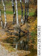 Купить «Woodland in autumn, Siberia, Russia, October 2011.», фото № 25154953, снято 18 февраля 2020 г. (c) Nature Picture Library / Фотобанк Лори