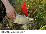 Купить «Researcher placing small mammal trap in field enclosure to survey Harvest mice (Micromys minutus) after release, Moulton, Northampton, UK, June.  Model released.», фото № 25156357, снято 24 октября 2018 г. (c) Nature Picture Library / Фотобанк Лори