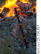 Купить «Traditional Argentinian roast of  Large hairy armadillo (Chaetophractus villosus) cooked outdoors over fire, La Pampa, Argentina.», фото № 25158857, снято 20 августа 2018 г. (c) Nature Picture Library / Фотобанк Лори