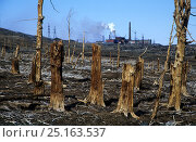 Купить «Dead, polluted Larch (Larix) forest, with power station behind, Norilsk, Russia.», фото № 25163537, снято 22 апреля 2018 г. (c) Nature Picture Library / Фотобанк Лори