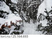 Купить «Snow covered pine trees on the alp mountain slope», фото № 25164693, снято 18 ноября 2016 г. (c) Wavebreak Media / Фотобанк Лори