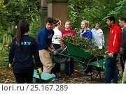 Купить «Friends of Tower Hamlets Cemetery Community Conservation volunteers carrying out conservation work to clear ivy from graveyard and to plant flowers as...», фото № 25167289, снято 22 августа 2018 г. (c) Nature Picture Library / Фотобанк Лори