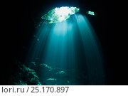 Sun rays filter through jungle foliage into the clear water of a cenote, Riviera Maya, Yucatan Peninsula, Mexico. Стоковое фото, фотограф Brandon Cole / Nature Picture Library / Фотобанк Лори