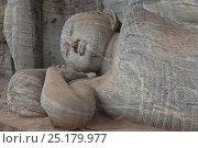 Купить «Reclining Buddha carving at Gal Vihara rock temple, Polonnaruwa, Sri Lanka.», фото № 25179977, снято 20 августа 2018 г. (c) Nature Picture Library / Фотобанк Лори