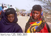 Купить «Peul / Fula women in traditional clothing at Ngarawal Fuduk, near Agadez, Niger, 2005.», фото № 25180381, снято 12 июля 2020 г. (c) Nature Picture Library / Фотобанк Лори