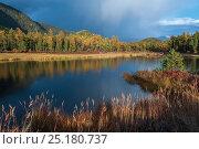 Купить «Lake Baikal landscape in autumn, Zabaikalsky National Park, Siberia, Russia, September 2013.», фото № 25180737, снято 24 августа 2019 г. (c) Nature Picture Library / Фотобанк Лори