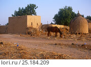 Купить «Hausa village on the road to Agadez, Niger, 2004.», фото № 25184209, снято 24 апреля 2019 г. (c) Nature Picture Library / Фотобанк Лори