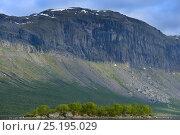 Купить «Steep side of mountainous valley, Saltoluokta Area, Greater Laponia Rewilding Area, Lapland, Norrbotten, Sweden, June 2013.», фото № 25195029, снято 21 августа 2018 г. (c) Nature Picture Library / Фотобанк Лори
