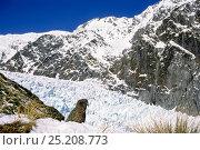 Kea (Nestor notabilis) in snowy winter alpine habitat above treeline, Fox Glacier, Westland National Park, South Island, New Zealand. Стоковое фото, фотограф Tui De Roy / Nature Picture Library / Фотобанк Лори