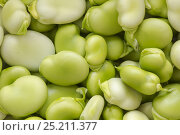 Купить «Organically grown shelled broad beans (Vicia faba) close-up», фото № 25211377, снято 27 мая 2020 г. (c) Nature Picture Library / Фотобанк Лори