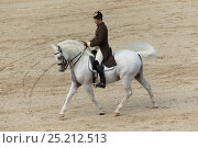 Купить «Rider from the Spanish Riding School on a Lipizzaner stallion performing dressage movements, Annual Autumn Parade, Piber Federal Stud, Maria Lankowitz...», фото № 25212513, снято 11 декабря 2017 г. (c) Nature Picture Library / Фотобанк Лори